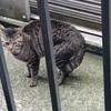 第5話  ベランダに現れた大きな猫と不思議な出来事