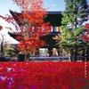 「そうだ京都、行こう。」のくろ谷さん「金戒光明寺」の拝観へ行く。話題の「アフロ仏」も!