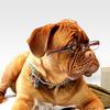 シニア犬向けの年齢換算表もあるのです ~犬の年齢を人間に換算してみたら(2/2)~