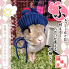 うさぎのカルタ 11☆写真で「ふ」~愛兎ファッション・ショー(笑)~