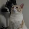 猫2匹飼ってます。可愛すぎるのでうちの猫紹介。