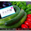 【定年後の余暇・無農薬野菜】市民農園・シェア畑