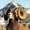 ✨牡羊座 ~生きることを選択するということ~