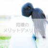 【実体験】同棲のメリットデメリット