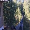 キャピラノ吊り橋は簡単にバスで行ける!スリル満点!自然満喫!!【バンクーバー旅#6】