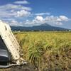 稲刈りは続くが八月は終わる。雷雨も・・・。