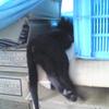 【従業猫】コナの供養の為、京都の猫寺へ行ってみた
