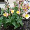春らしい庭に🎵