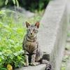 木登り猫を撮影