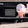 ヒラリーよりもプーチンへの好感度を増す共和党支持者---WSJ