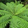 タラナキ山の森とシダ植物