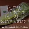 410食目「『セロリ』って本当は『セルリー』なのかも知れない!?」博多ファーマーズマーケットで見つけた福岡・みやま市特産のセルリーはとても大きかった!
