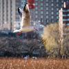 【239】台東区上野公園 水鳥の楽園