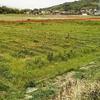 新規太陽光発電用地の草刈りに行ってきました ~自走式と乗用式草刈り機のメリット・デメリット~
