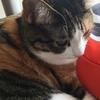 【愛猫日記】毎日アンヌさん#10