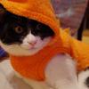 今日の黒猫モモ&白黒猫ナナの動画ー619