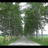 【東北&北海道(25)】十勝牧場で白樺並木の絶景を見る【音更町】