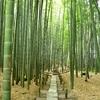 竹の庭が有名な鎌倉「報国寺」 その見所を紹介(Kamakura, Houkokuji)