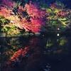徳川園の紅葉ライトアップは丁度見頃でした (in愛知)