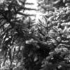 「FUJINON XF 90mm F2 R LM WR」 monochrome photography #93