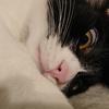 今日の黒猫モモ&白黒猫ナナの動画ー756