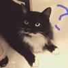 猫にマタタビ。ローガンはどうなのだ?!