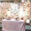 ≪本店3階≫ミニエマキシ 林氏による  桜のパーティーのはじまりです!✿❀✿
