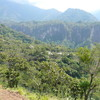 グァテマラ、パチュージ農園