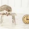 茶の間の時計を10分進ませていますが何か?