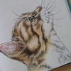 猫をポリクロモス色鉛筆で塗ってみた☆