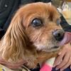 愛犬コジロウ前立腺癌完治への道 | ブログで報告【注意!!今回はグロ画像あり】