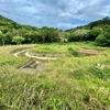 名蔵ダム親水広場の池(沖縄県石垣島)
