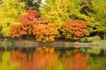 秋の札幌・中島公園、すっかり紅葉していました。
