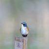 野鳥撮影に行ってきました@薬師池公園