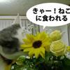 花を喰うネコ