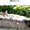 ホームページと猫ちゃん写真募集のお知らせ