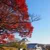 金沢城の紅葉(前編)