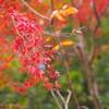 愛知県瀬戸市の岩屋堂で小さい秋を探してきました