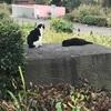 猫の日の 上野公園 湯島天神 松坂屋