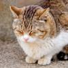 野良猫に餌をやりにくるババアは、果たして善人か悪人か