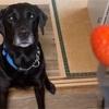 いちごを食べたい犬