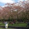 ボス公園の桜祭りに参加しました。