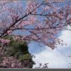 【初心者】桜写真をいい感じに補正してみた