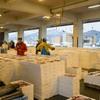 2018年2月10日 小浜漁港 お魚情報