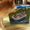 プール買えた~~~~~。