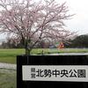 雨の中、桜を見に北勢中央公園に行ってきた