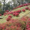 『さつき山公園』新潟市秋葉区の「ツツジ」と「サツキ」