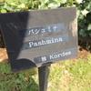 パシュミナ 京成バラ園 2016/05/16
