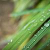 RICOH GRⅢで少しだけ雨の中撮ってみた