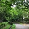 新緑の季節 〜桜を見て悲しくなる理由がわかった〜